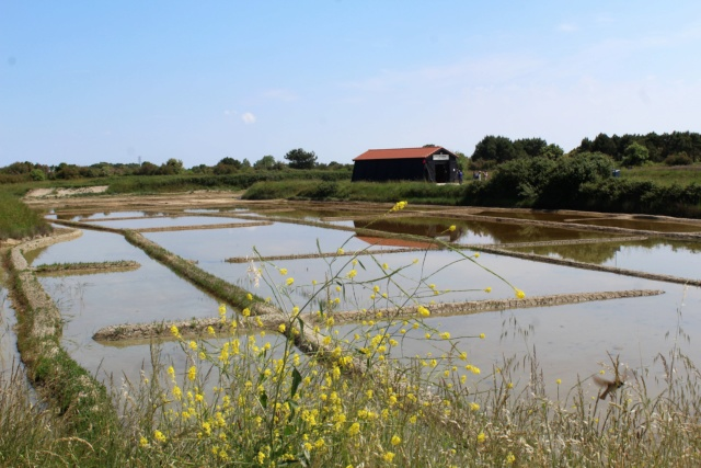 Île d'Oléron (Charente-Maritime - 17). Img_5821