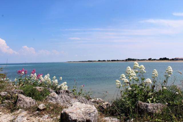 Île d'Oléron (Charente-Maritime - 17). Img_5924