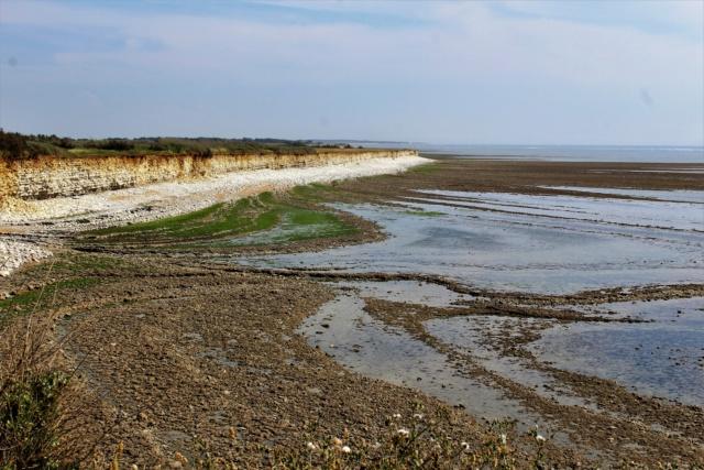 Île d'Oléron (Charente-Maritime - 17). Img_5936
