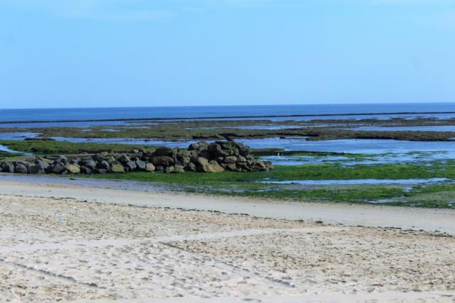 Île d'Oléron (Charente-Maritime - 17). Img_5937