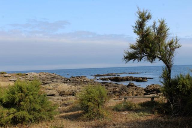 Île d'Yeu (Vendée -85). Img_6213