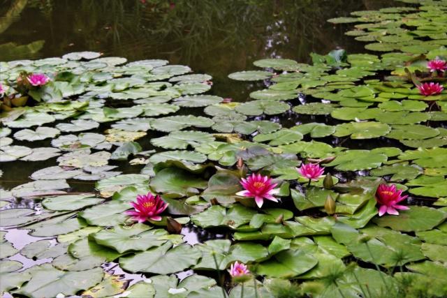 Parc Floral de la Court d'Aron (Vendée - 85) Img_6220