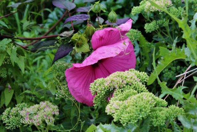 Parc Floral de la Court d'Aron (Vendée - 85) Img_6224