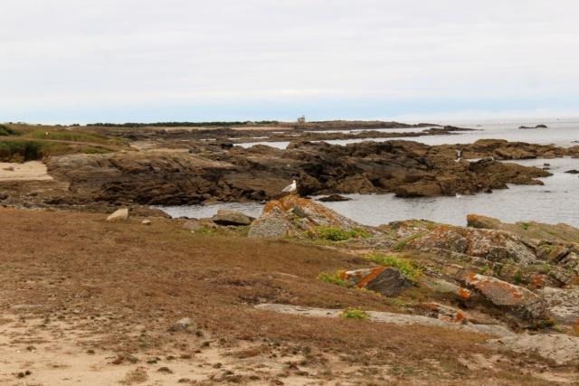Île d'Yeu (Vendée -85). Img_6315