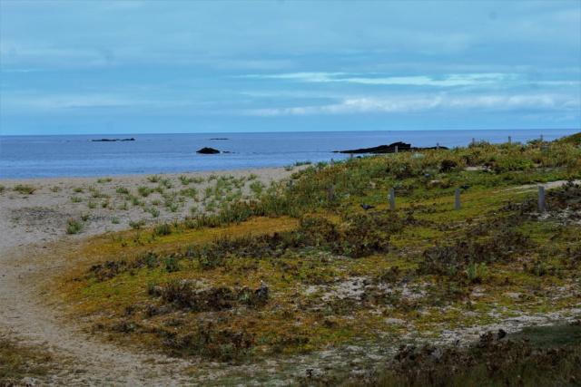 Île d'Yeu (Vendée -85). Img_6318