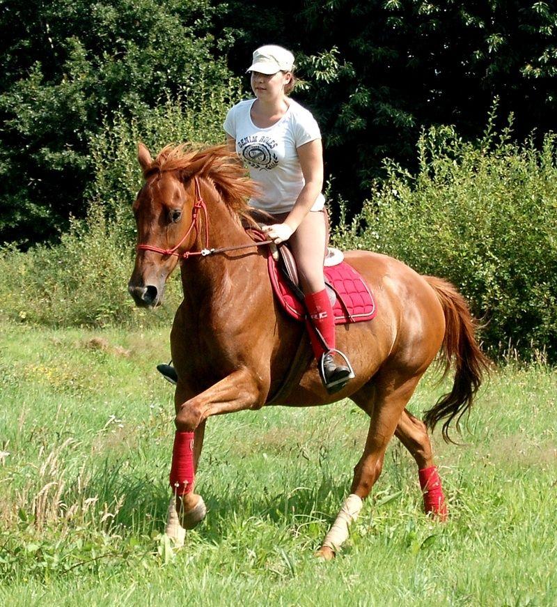 SISKO - TF né en 2007 - adopté en août 2011 par clagui - Page 4 Dsc_0413