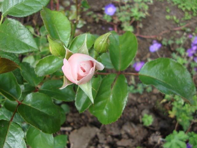 The generous gardener de Austin Rosier11
