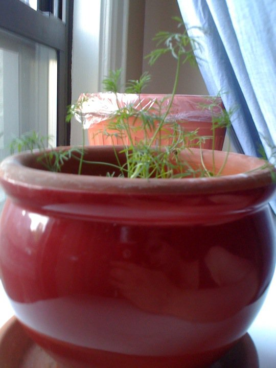 Indoor Container Garden - City Living Dillau10