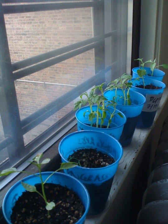 Indoor Container Garden - City Living Seedli10