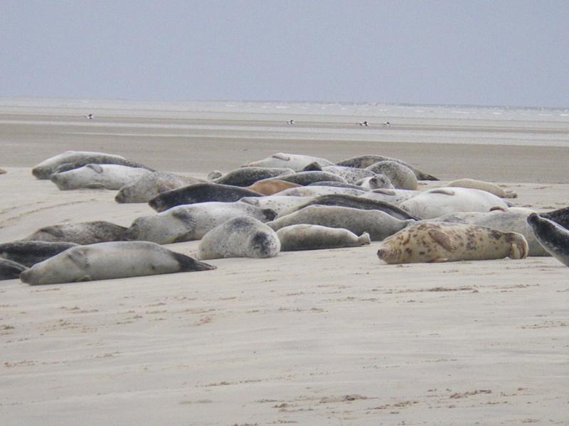 Bilder für die lieben Dementen Robben10