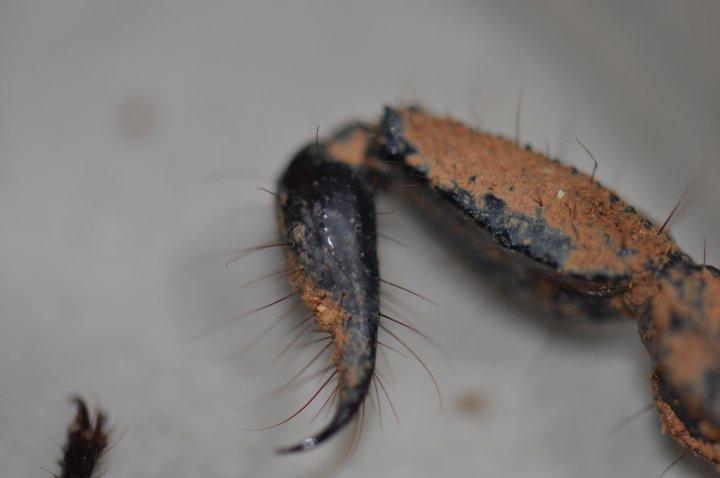 help id this scorpion Kihjgj11