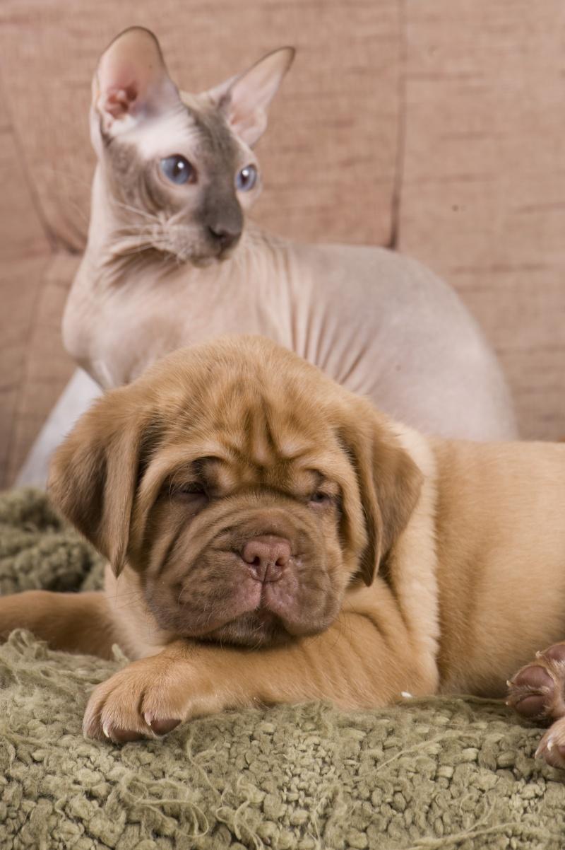Мой ласковый котик   Тоша-помню, тоскую, люблю... 15210