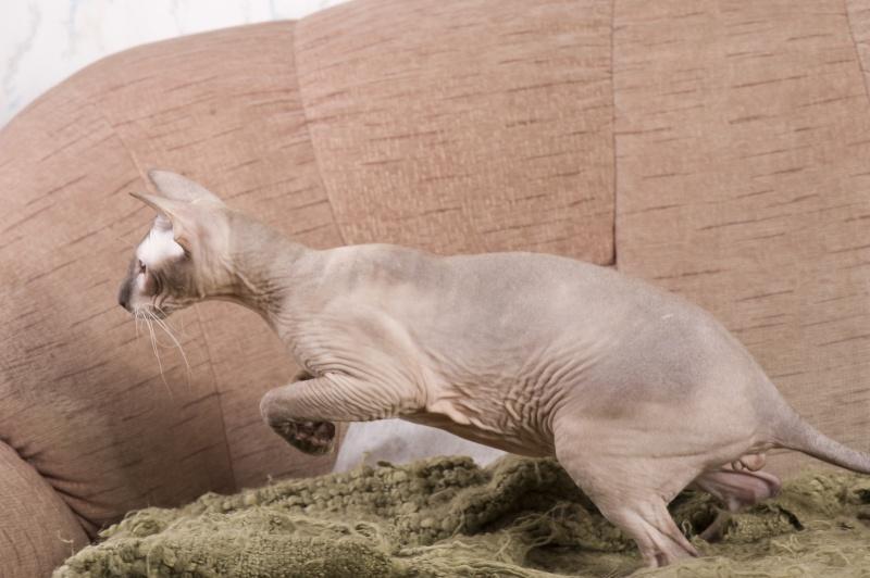 Мой ласковый котик   Тоша-помню, тоскую, люблю... 17410