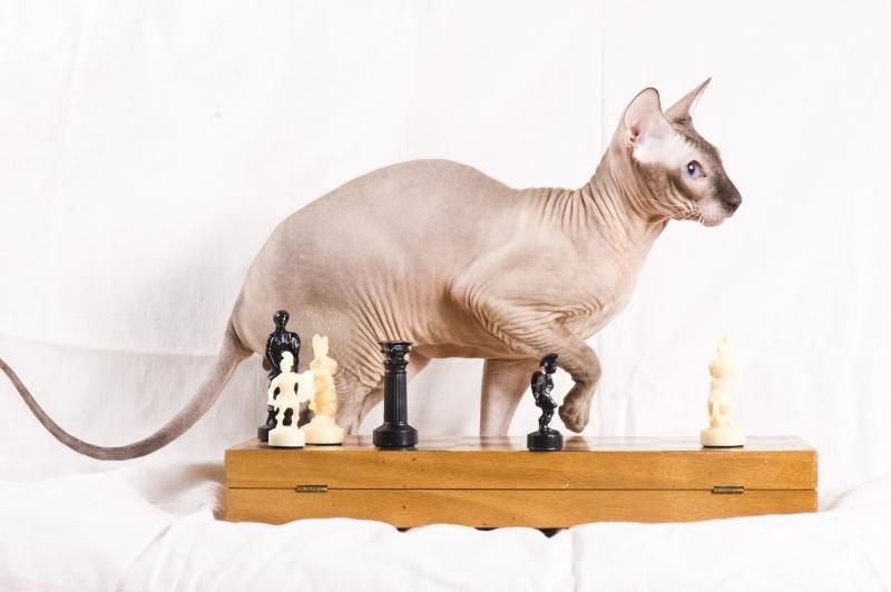 Мой ласковый котик   Тоша-помню, тоскую, люблю... Dsc_2214