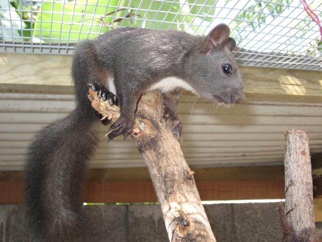 Présentation de mon couple d'écureuil du Japon Img_3731