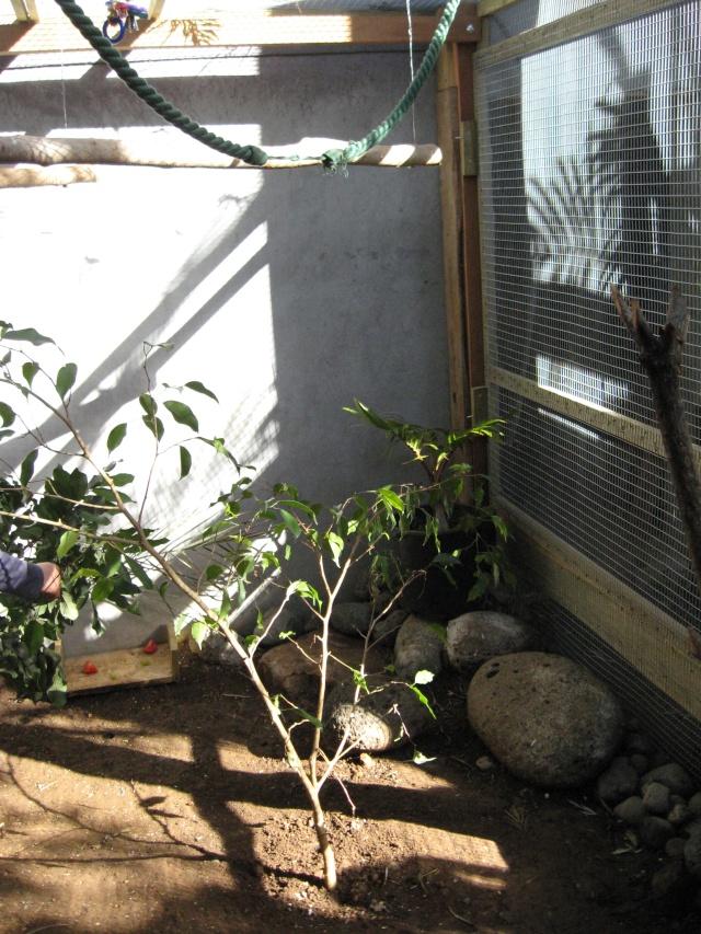 Présentation de mon couple d'écureuil du Japon Img_3734