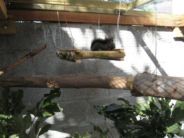 Présentation de mon couple d'écureuil du Japon Img_3737
