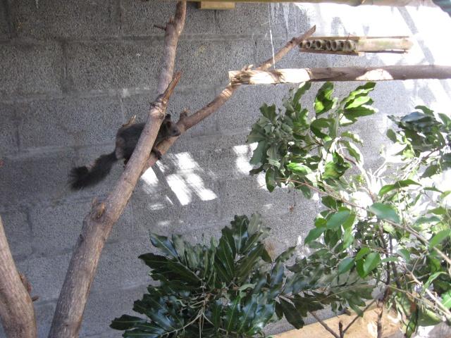 Présentation de mon couple d'écureuil du Japon Img_3738