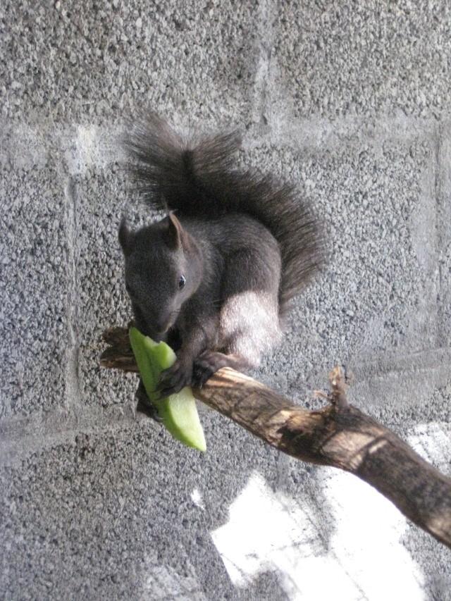 Présentation de mon couple d'écureuil du Japon Img_3739