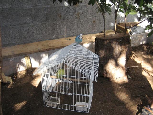 Présentation de mon couple d'écureuil du Japon Img_3741