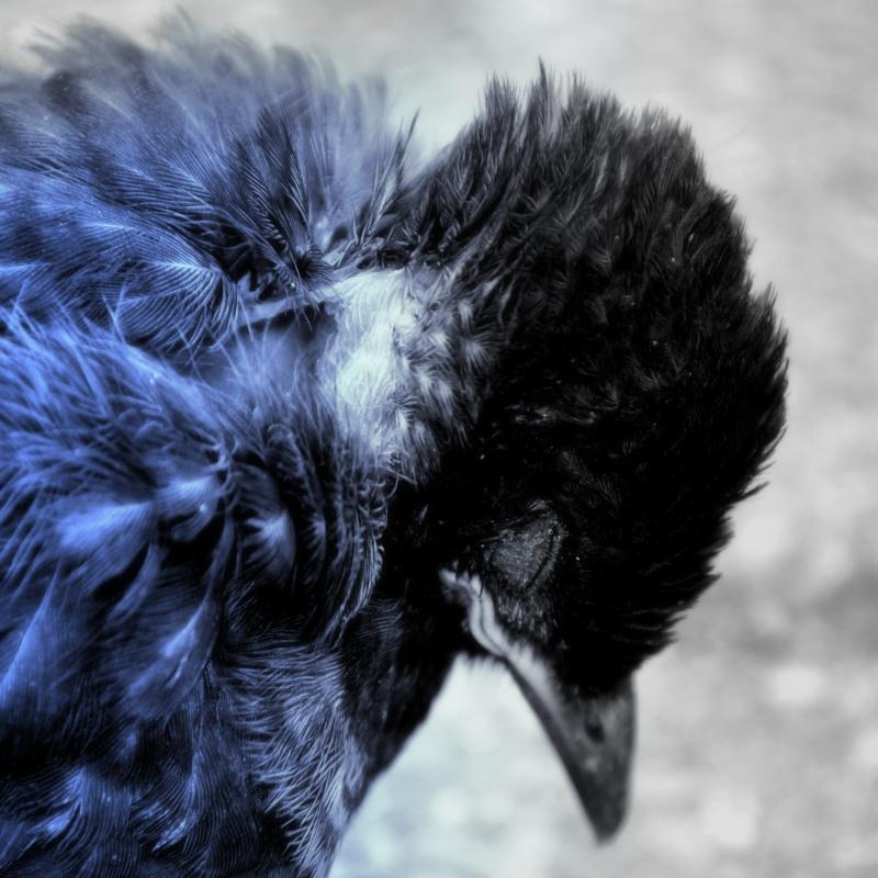 Mes Créations - Page 5 Oiseau10