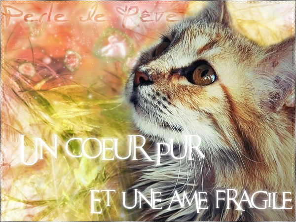 Fleur de Givre; Welcome in my crazy world... Chatlo11