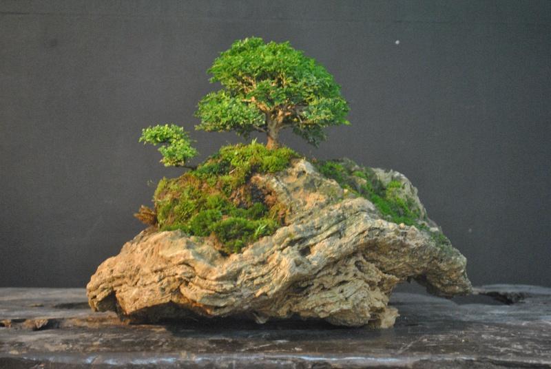 Mango tree inspired landscape Dsc_0114