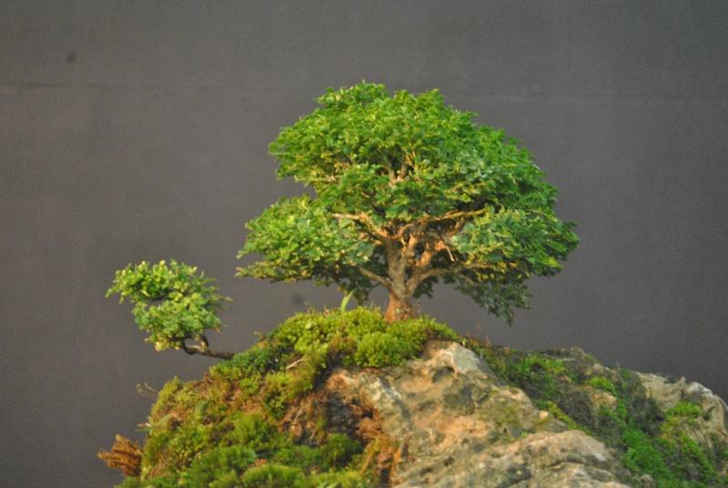 Mango tree inspired landscape Dsc_0115