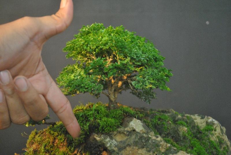 Mango tree inspired landscape Dsc_0118