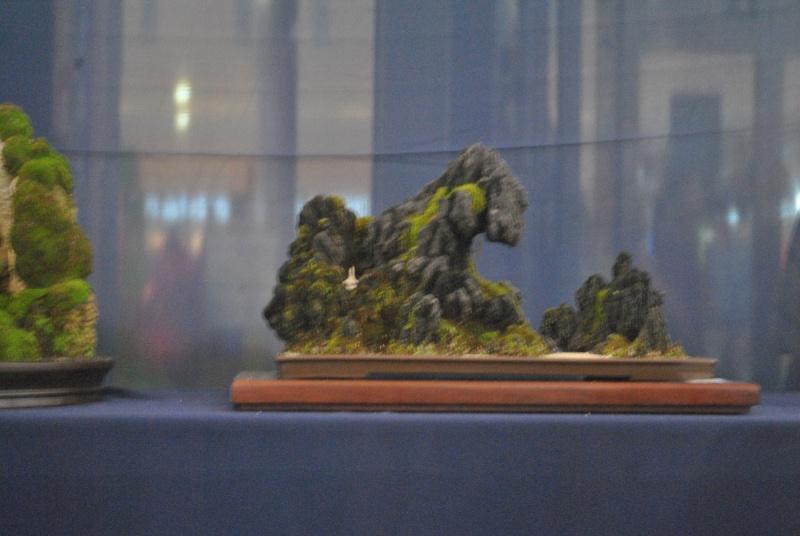 Penjing show Dsc_0131