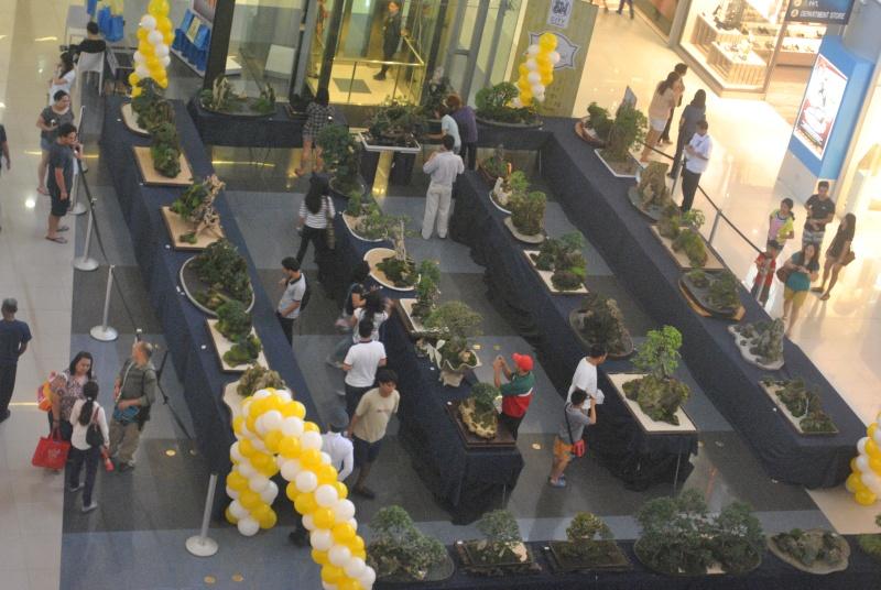 Penjing show Dsc_0211
