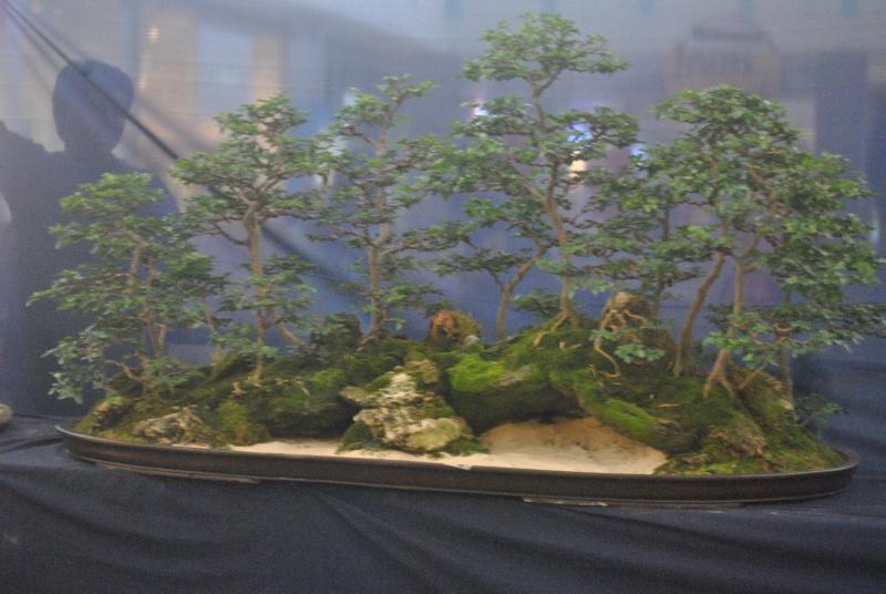 Penjing show Dsc_0216