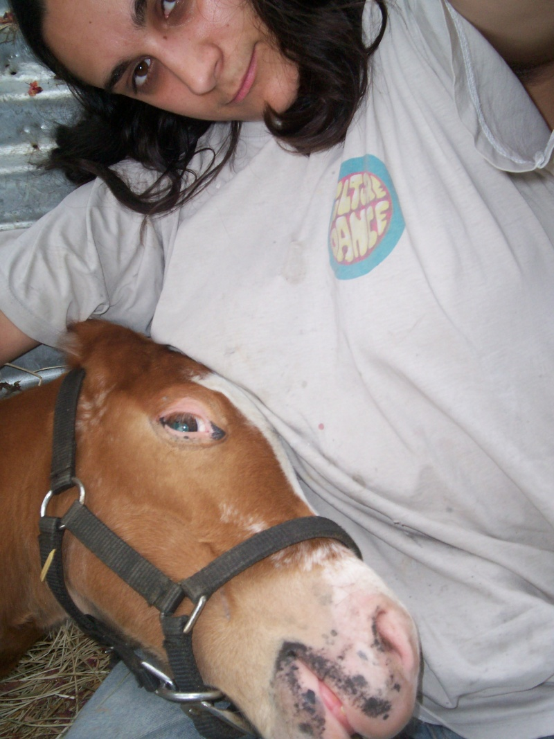 CONCOURS PHOTO : Les chevaux paresseux... 17110