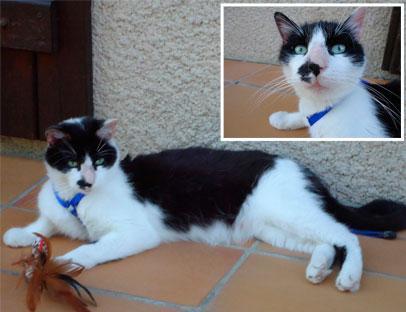 Cliquez pour nos chats sur Actuanimaux ! - Page 2 Hawaia10