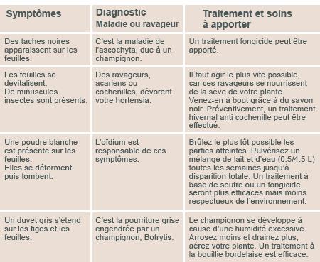 JARDINAGE: Quelques conseils pour débutantes  - Page 2 Diagno11