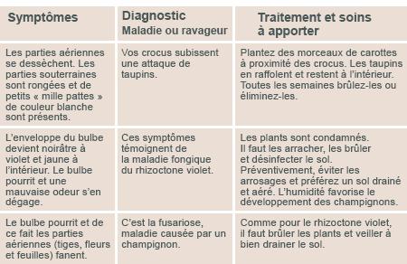 JARDINAGE: Quelques conseils pour débutantes  - Page 2 Diagno12
