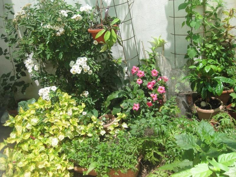 un coin en ce moment  Jardin15