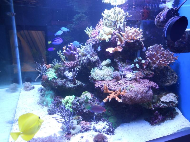 karlito's reef 2 - Page 5 Dscn1312