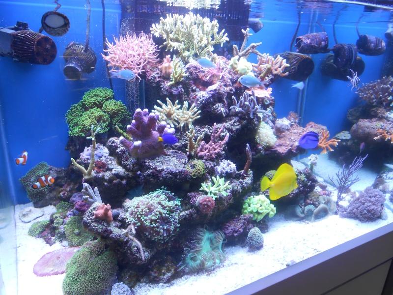 karlito's reef 2 - Page 5 Dscn1313