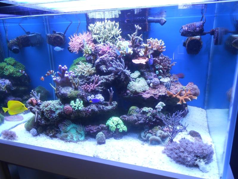karlito's reef 2 - Page 5 Dscn1314