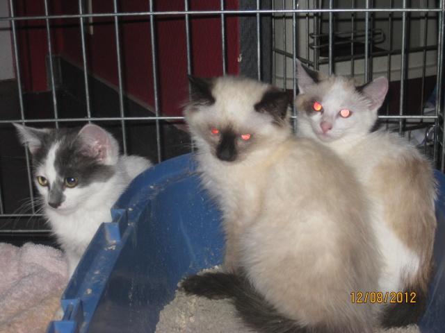 YUMALA, chatonne de 6 mois à l'adoption (77) -F-R-VV-LBC Chaton11
