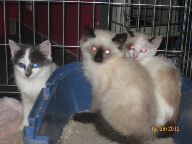 YUMALA, chatonne de 6 mois à l'adoption (77) -F-R-VV-LBC Chaton12
