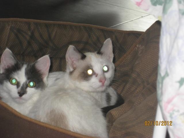 YUMALA, chatonne de 6 mois à l'adoption (77) -F-R-VV-LBC Magdal20