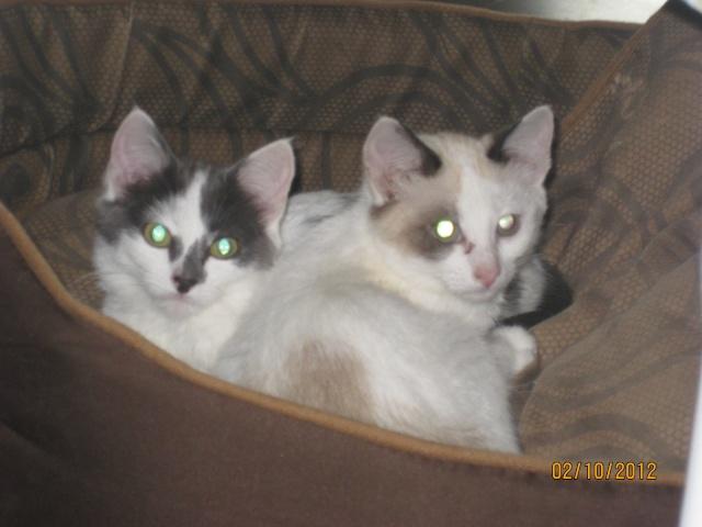 YUMALA, chatonne de 6 mois à l'adoption (77) -F-R-VV-LBC Magdal21