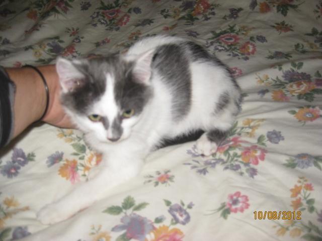 YUMALA, chatonne de 6 mois à l'adoption (77) -F-R-VV-LBC Yumala10