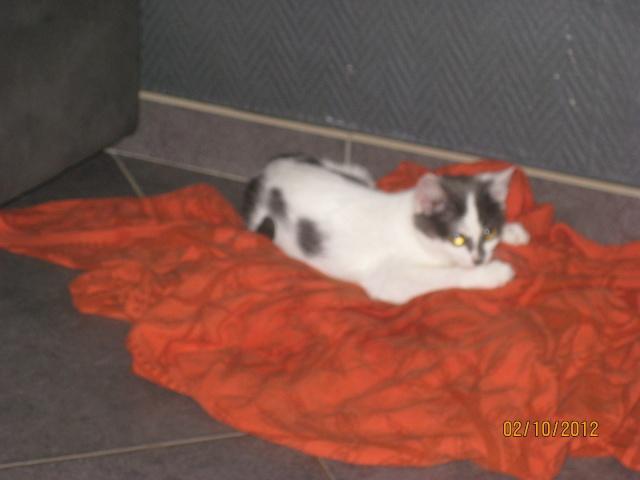 YUMALA, chatonne de 6 mois à l'adoption (77) -F-R-VV-LBC Yumala12