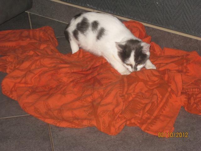 YUMALA, chatonne de 6 mois à l'adoption (77) -F-R-VV-LBC Yumala13