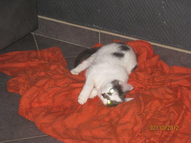 YUMALA, chatonne de 6 mois à l'adoption (77) -F-R-VV-LBC Yumala14