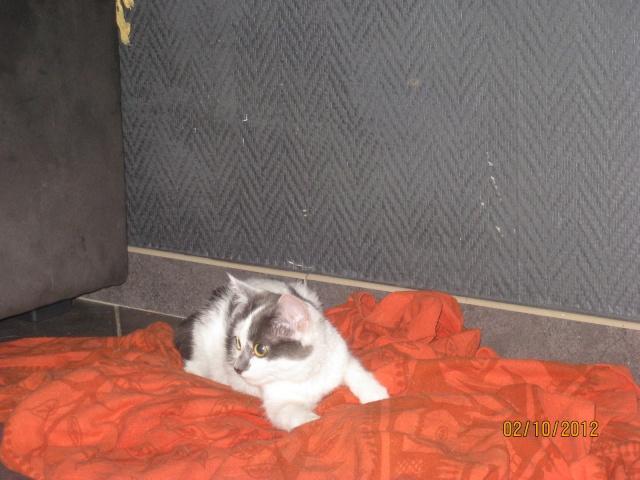 YUMALA, chatonne de 6 mois à l'adoption (77) -F-R-VV-LBC Yumala15