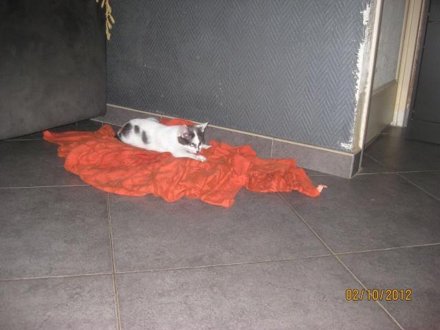 YUMALA, chatonne de 6 mois à l'adoption (77) -F-R-VV-LBC Yumala17